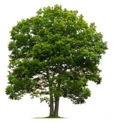 Prestations de dessouchage d'arbres dans l'Indre